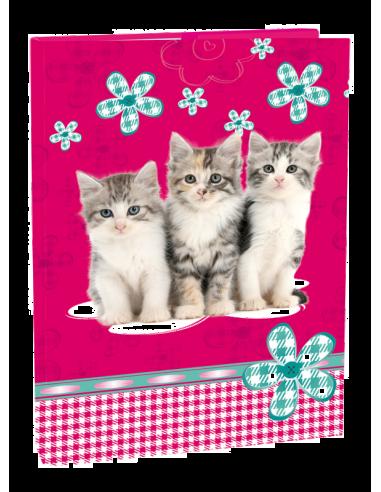 Box na sešity A4 Cats